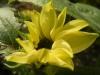 Valentine Sunflower
